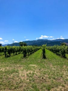 a stunning photo of a vineyard you are bound to see on any one of the many marlborough wine tours