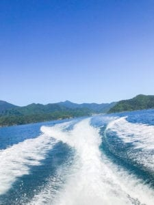 A picture from the back of the boat on my way to accommodation in marlborough sounds