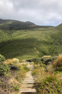 a photo looking down a path of some of the pouakai circuit on the way to holly hut