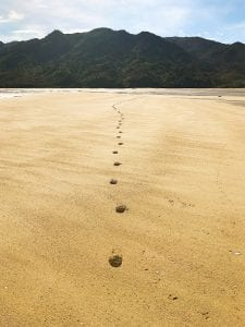 abel-tasman-national-park 7