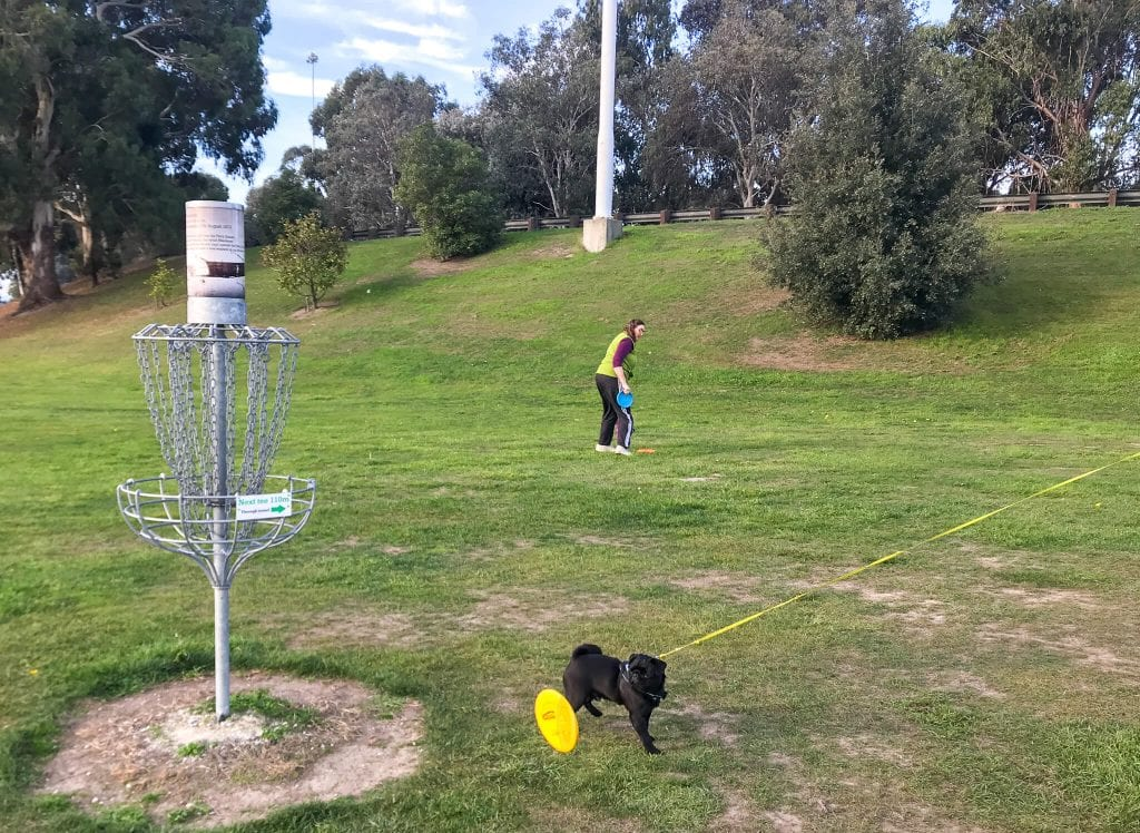 one of the best things to do in Timaru is playing disc golf at cbay