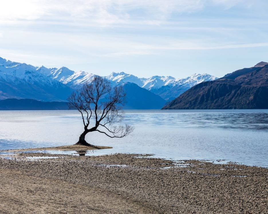 a photo of the iconic #thatwanakatree. Visiting wanaka is an absolute must while travelling new zealand in a campervan!