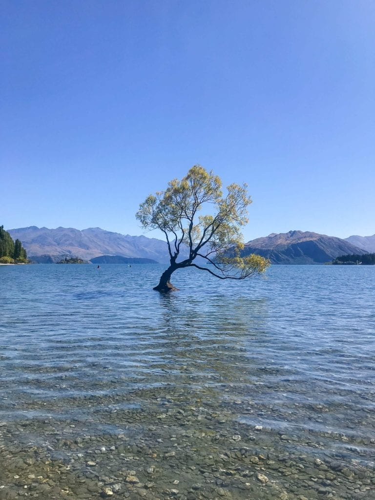 One of the best things to do in Otago is visiting that wanaka tree