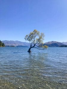 that wanaka tree is one of the best free things to do in in wanaka on the waterfront