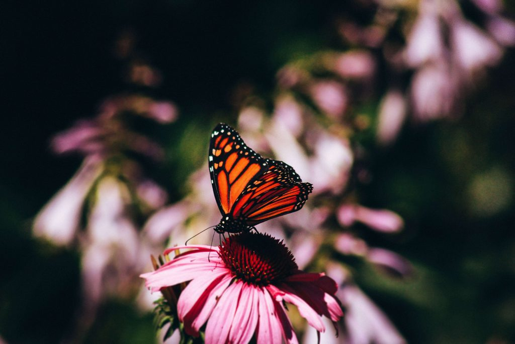 picture of a butterfly representing major life changes